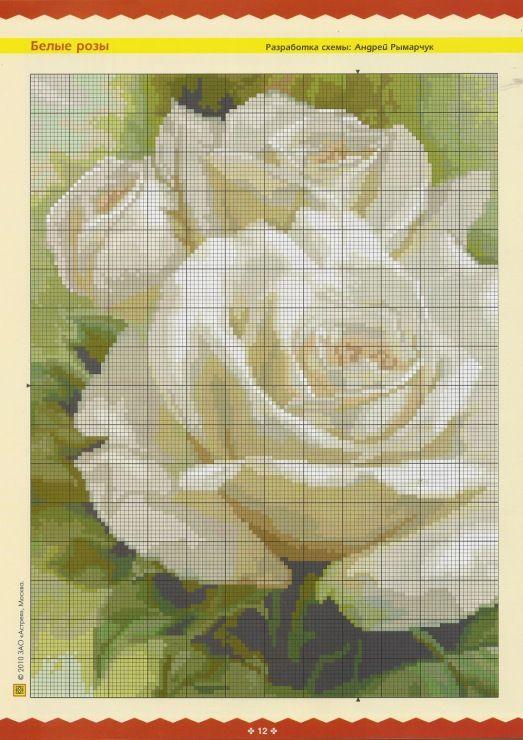 Gallery.ru / Фото #90 - розы разные - irisha-ira