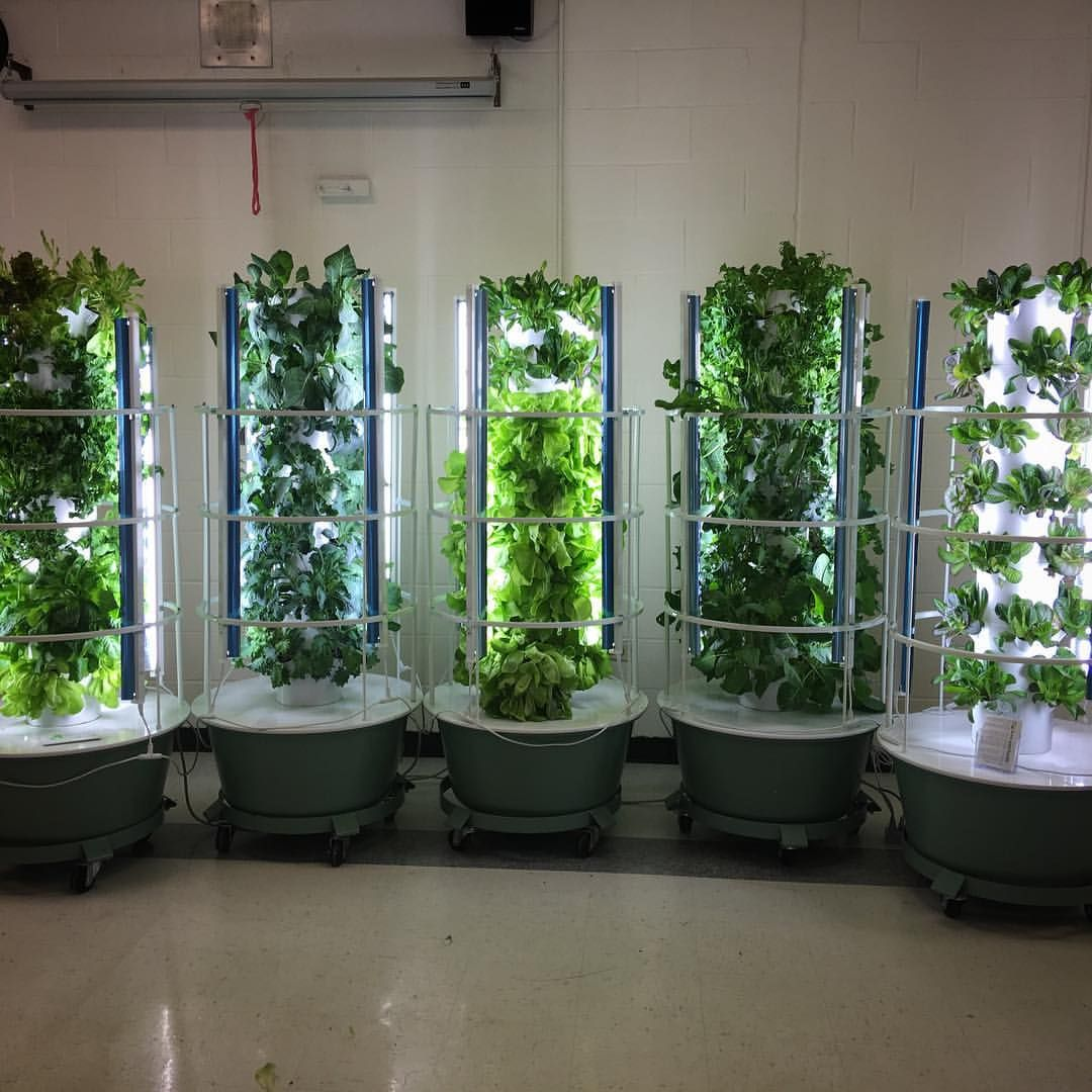 Vertical Farming 101 Grow Your Own Fruits Vegetables 400 x 300