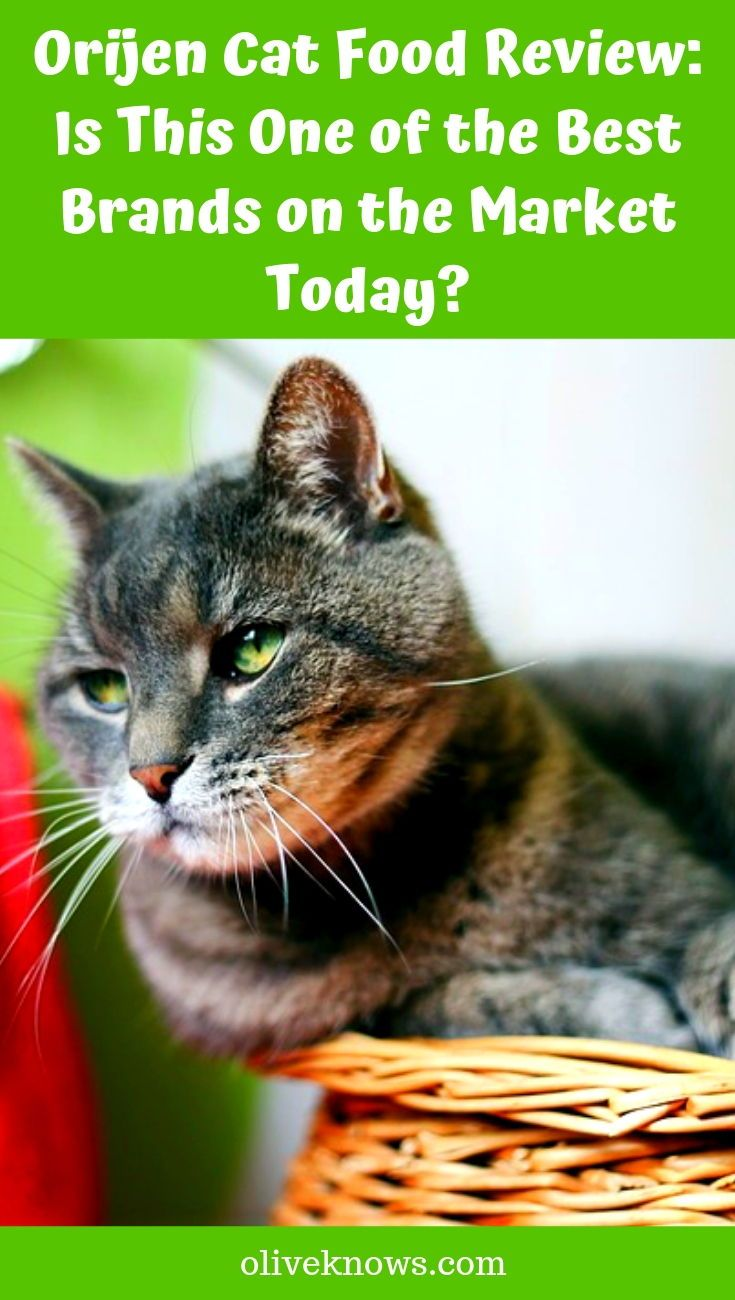 Orijen Cat Food Review Is This One of the Best Brands on