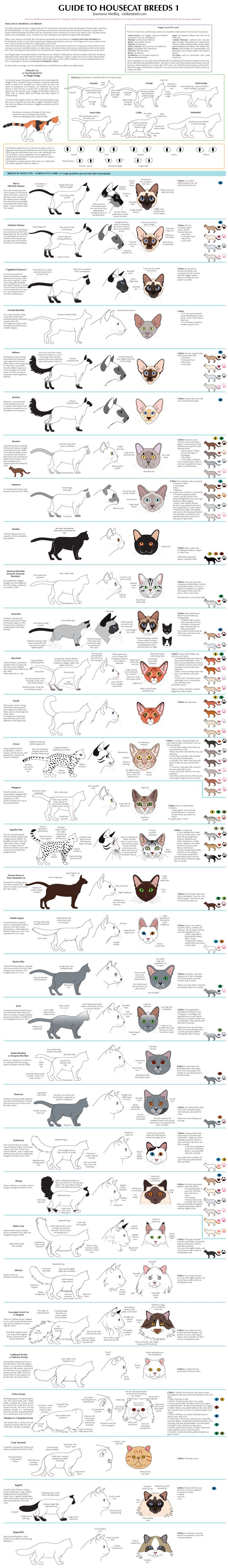 Along the same lines as my Guide to Cat Colors, this is