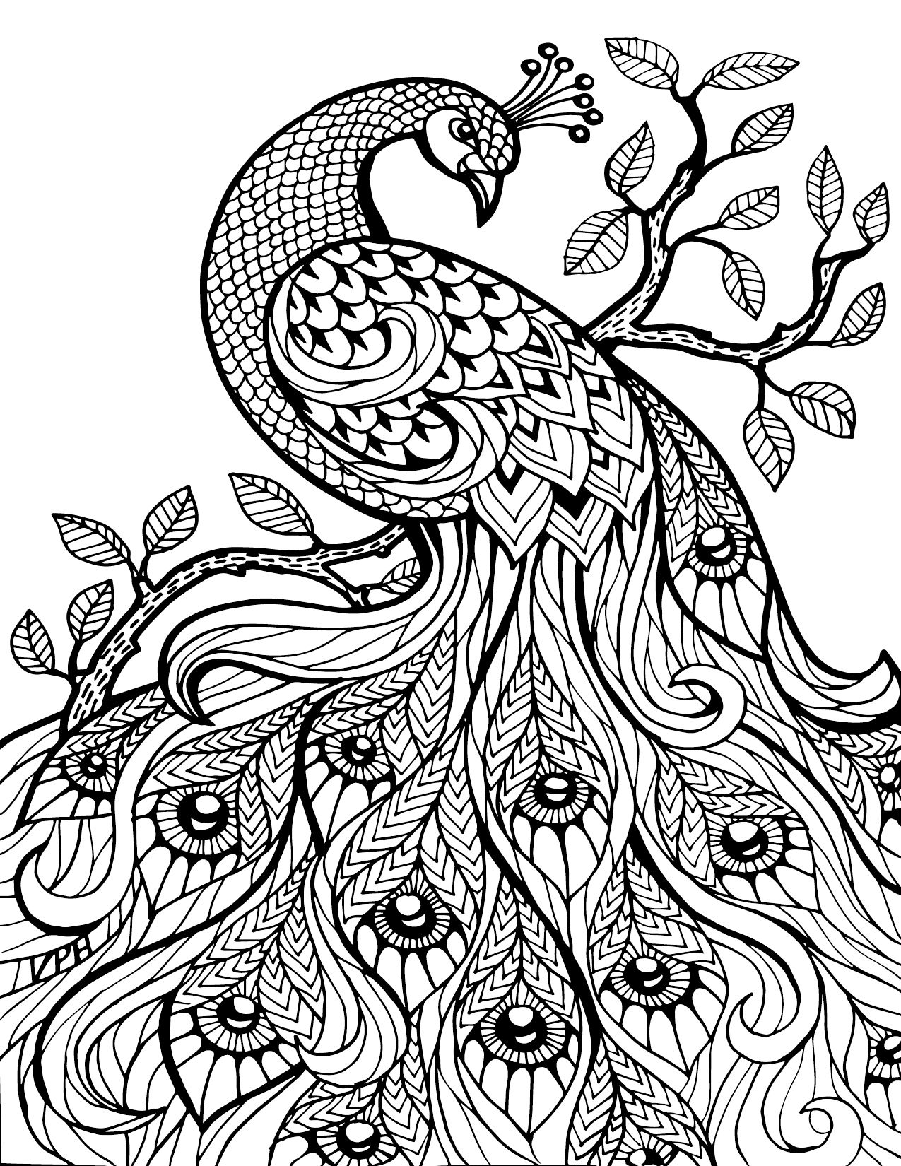 coloring pages peacock Free Printable Coloring Pages For Adults Only Image 36 Art  coloring pages peacock