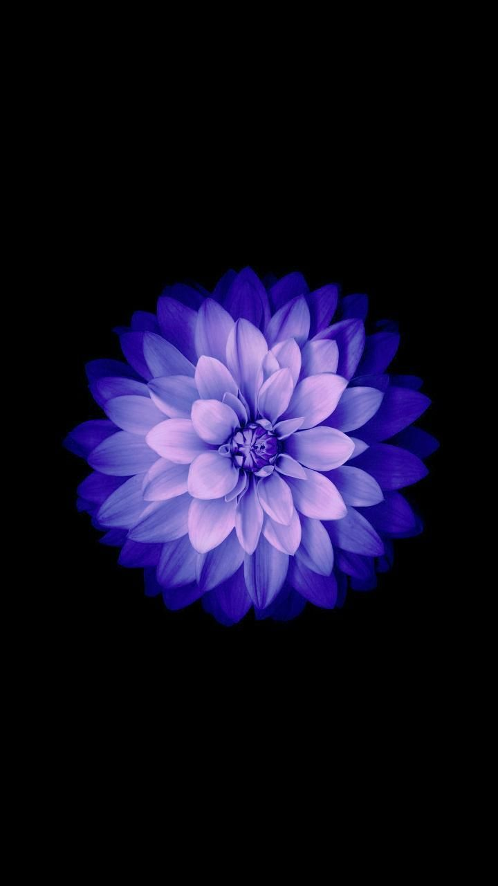 flower wallpaper by abej666 - 7e - Free on ZEDGE™