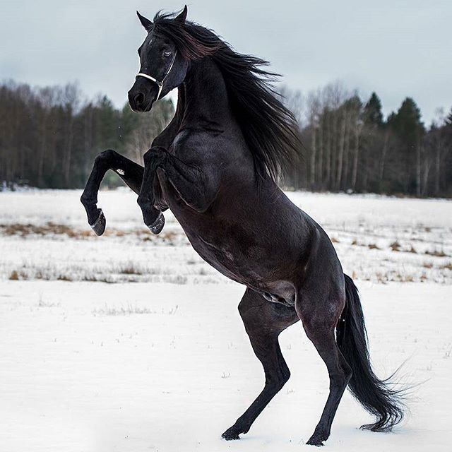 Black horse in snow #HorseSadles | Horse Sadles | Horses ...