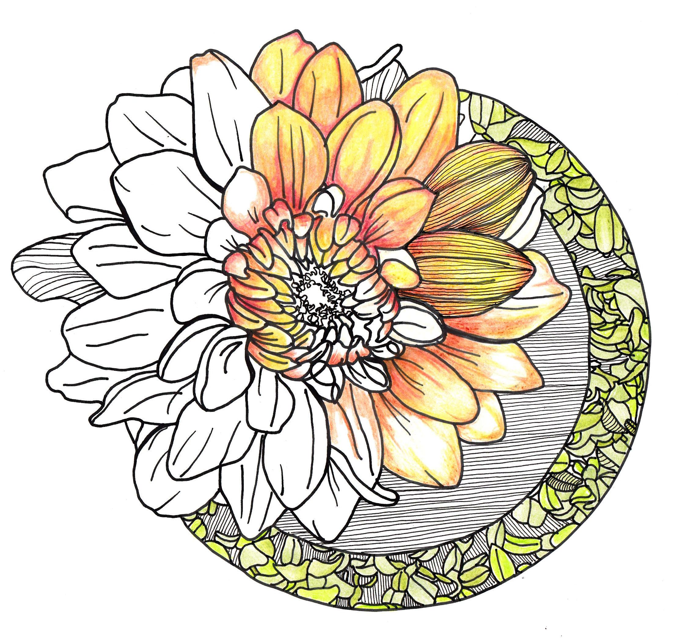 line drawing - orange flower