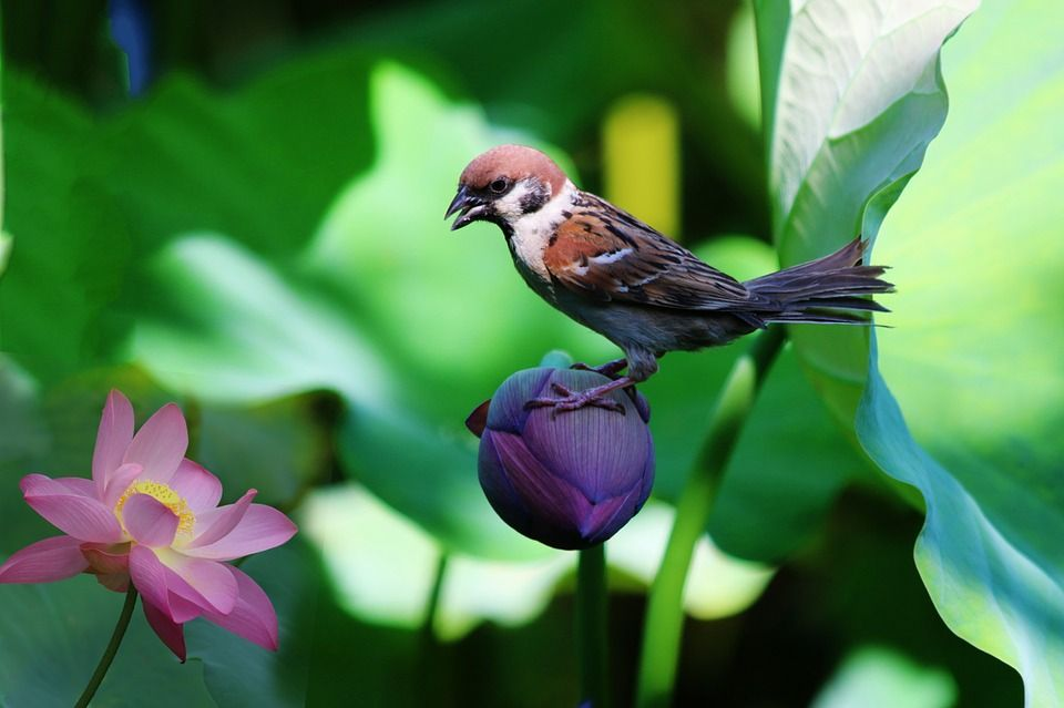 Image Result For Images Birds And Flowers Birds Pretty Birds