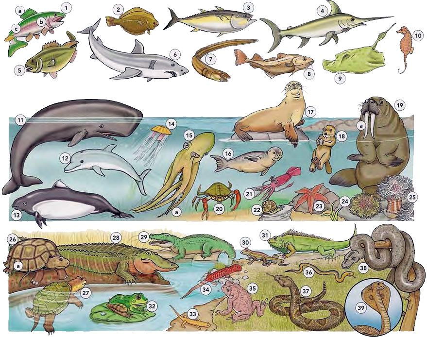 Fish sea animals and reptiles vocabulary PDF Idioma