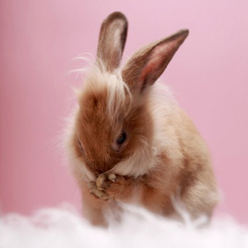 Entzuckende Hasenbilder Von Ilona Habben Zu Ostern Nein Eigentlich Fur Jeden Tag Ohhh Mhhh Hasenbilder Kleine Tiere Haustiere