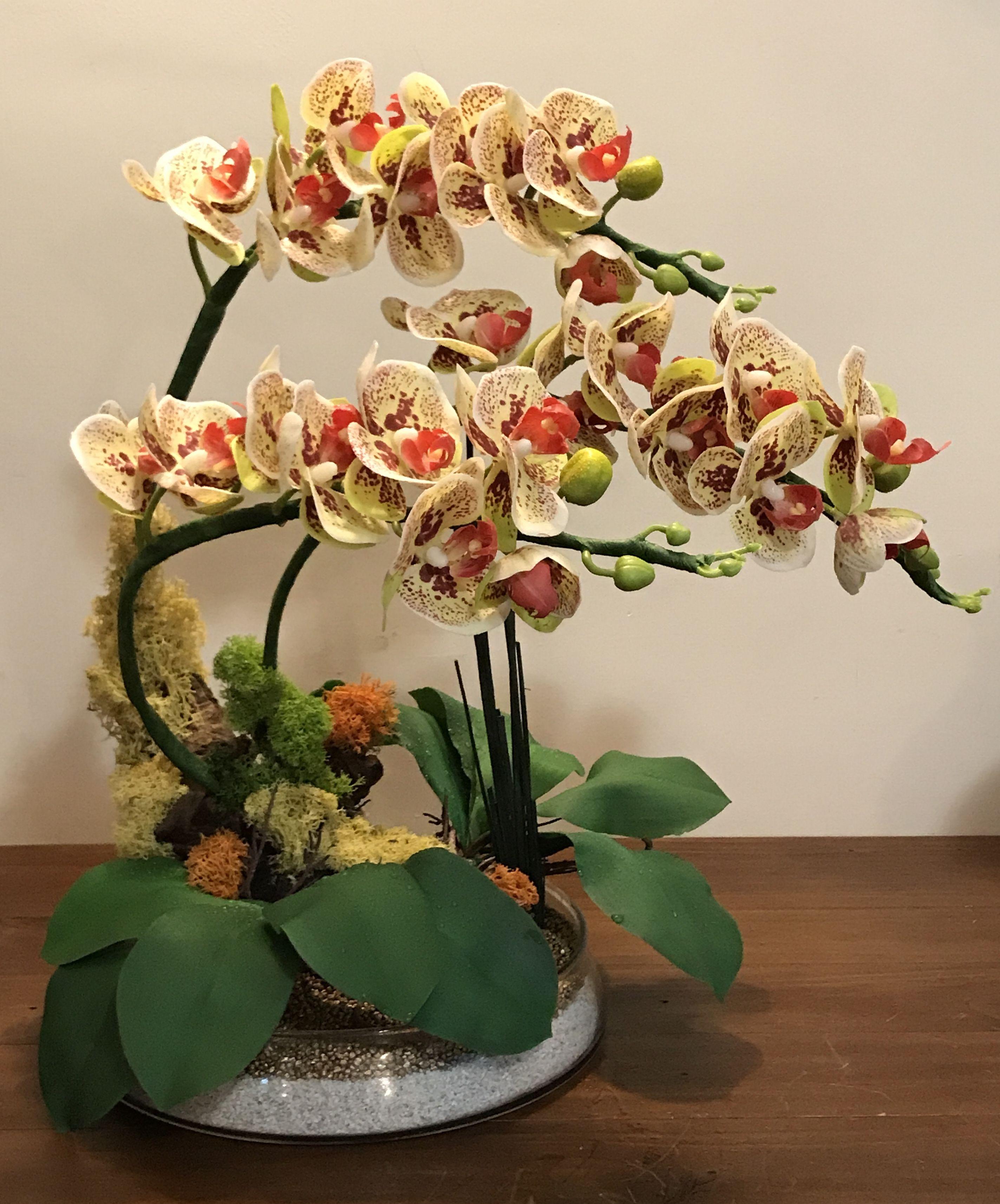 Pin De William Thompson En Orchidee Orquideas Artificiales Plantas De Orquideas Flores Exoticas