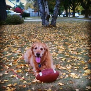 Instagram Photo: Ziggy is ready for some football  Shifting seasons