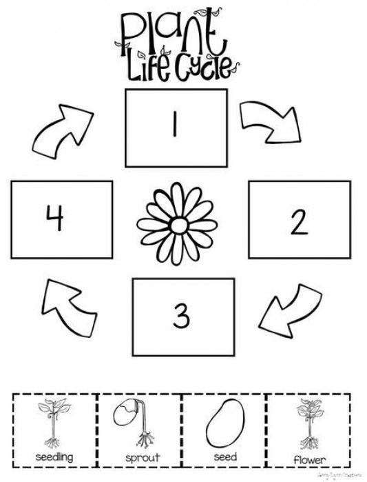 Preschool level plant life cycle worksheet. #cycling #life