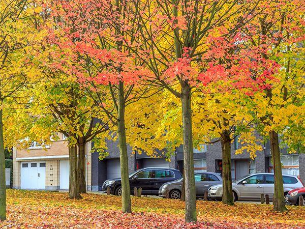بالصو ر الخريف في بلجيكا ي لب س الشوارع ثوب الجمال والتألق Tourism Plants Travel