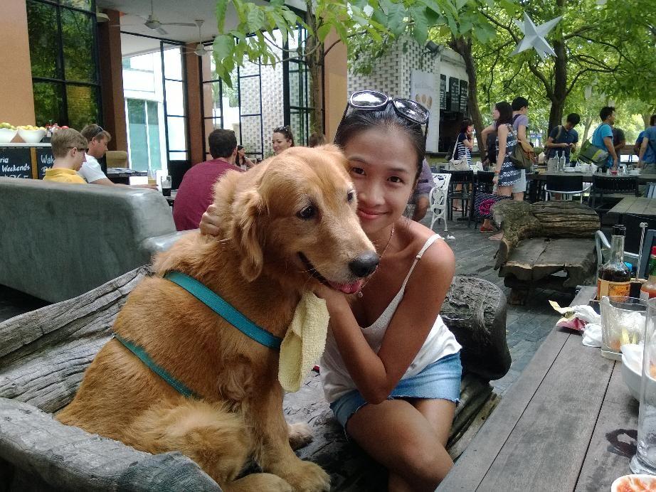 Paru Golden Retriever Pawshake Singapore Dogs Singapore Animals