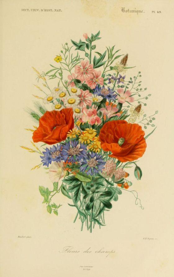 Gravures Couleur De Fleurs Gravure De Fleur 0209 Fleurs