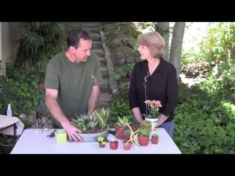 How To Make A Succulent Dish Garden For Indoors Succulent