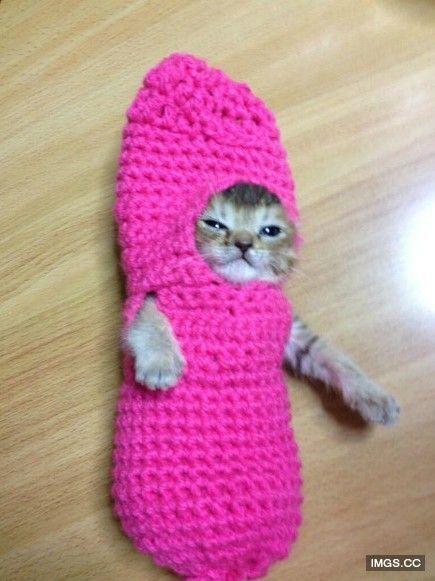 為受傷的小貓咪織毛衣 這樣牠就可以安心吃飯了