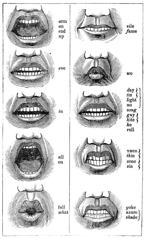 Learn Proper Diction With These 19th Century Mouth Diagrams Diy