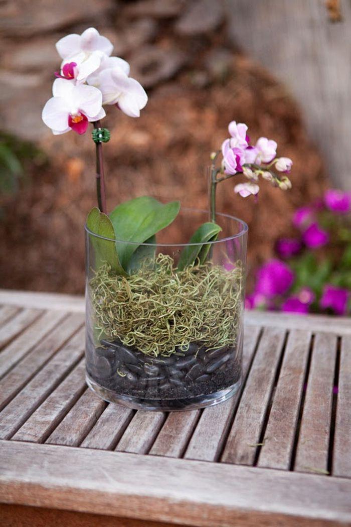 zimmerpflanzen schöne dekoideen orchidee pflege terrarium - tipps pflege pflanzen wintergarten
