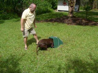 Self Heated Underground Doghouse Dog Playground Pet Kennels