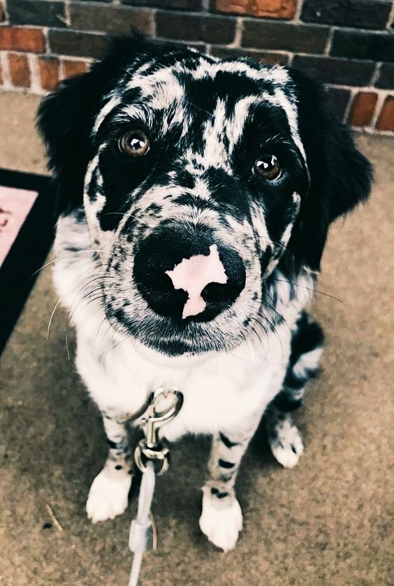 Pin By Mckenna Hakanson On How Now Brown Cow Really Cute Dogs