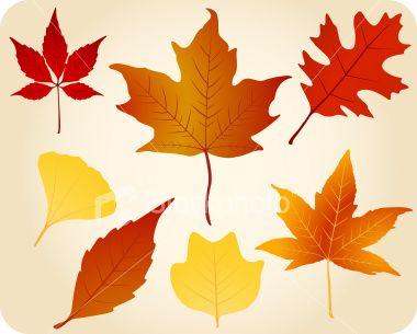 Autumn leaves | Stock Illustration | iStock