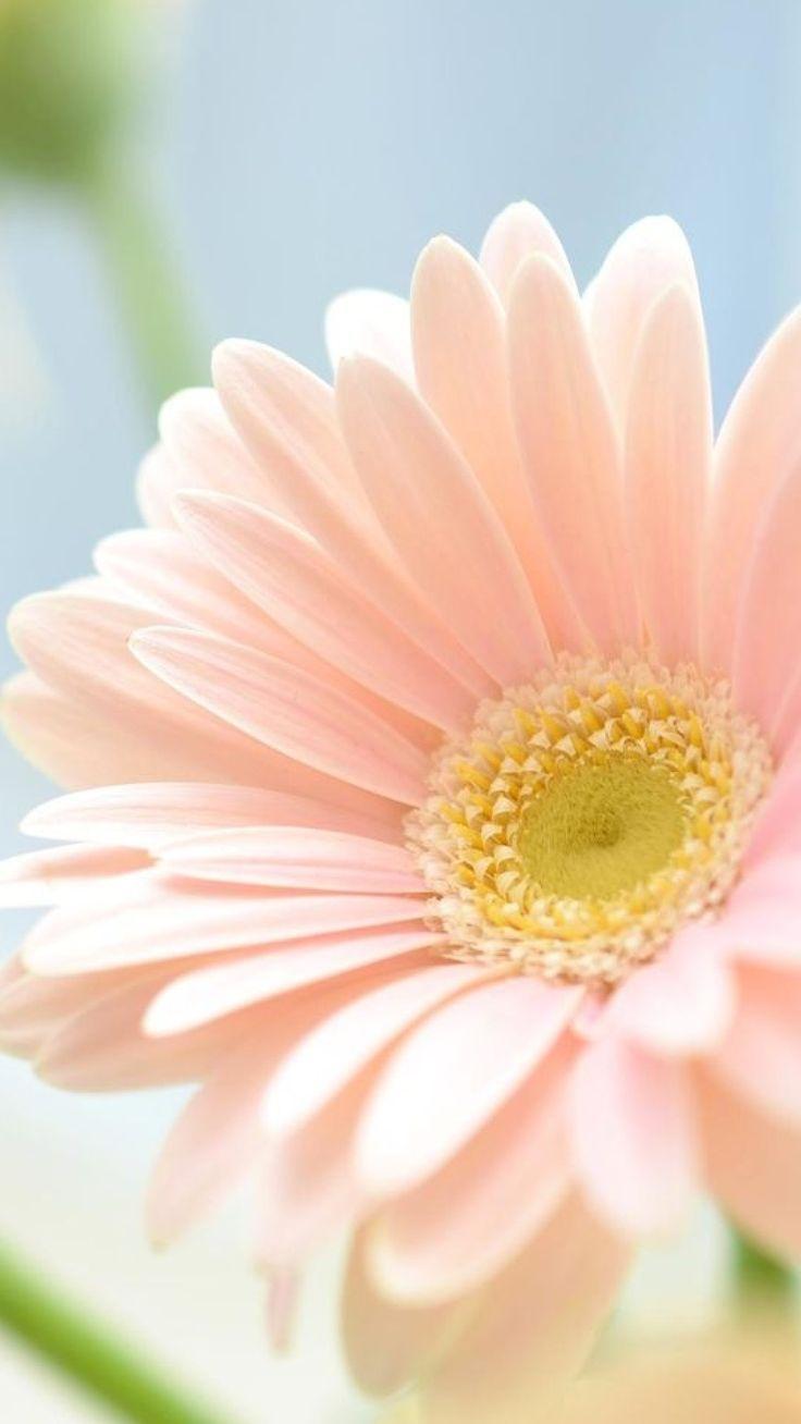 Pin by ginger on Fleurs زهرة | Flower phone wallpaper, Floral wallpaper, Flower wallpaper