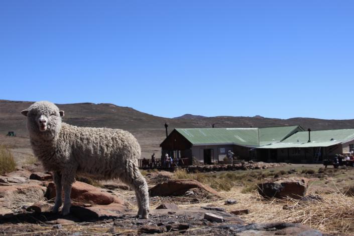 Enjoy the Ride – Sani Pass, Drakensberge und der höchste Pub von Afrika