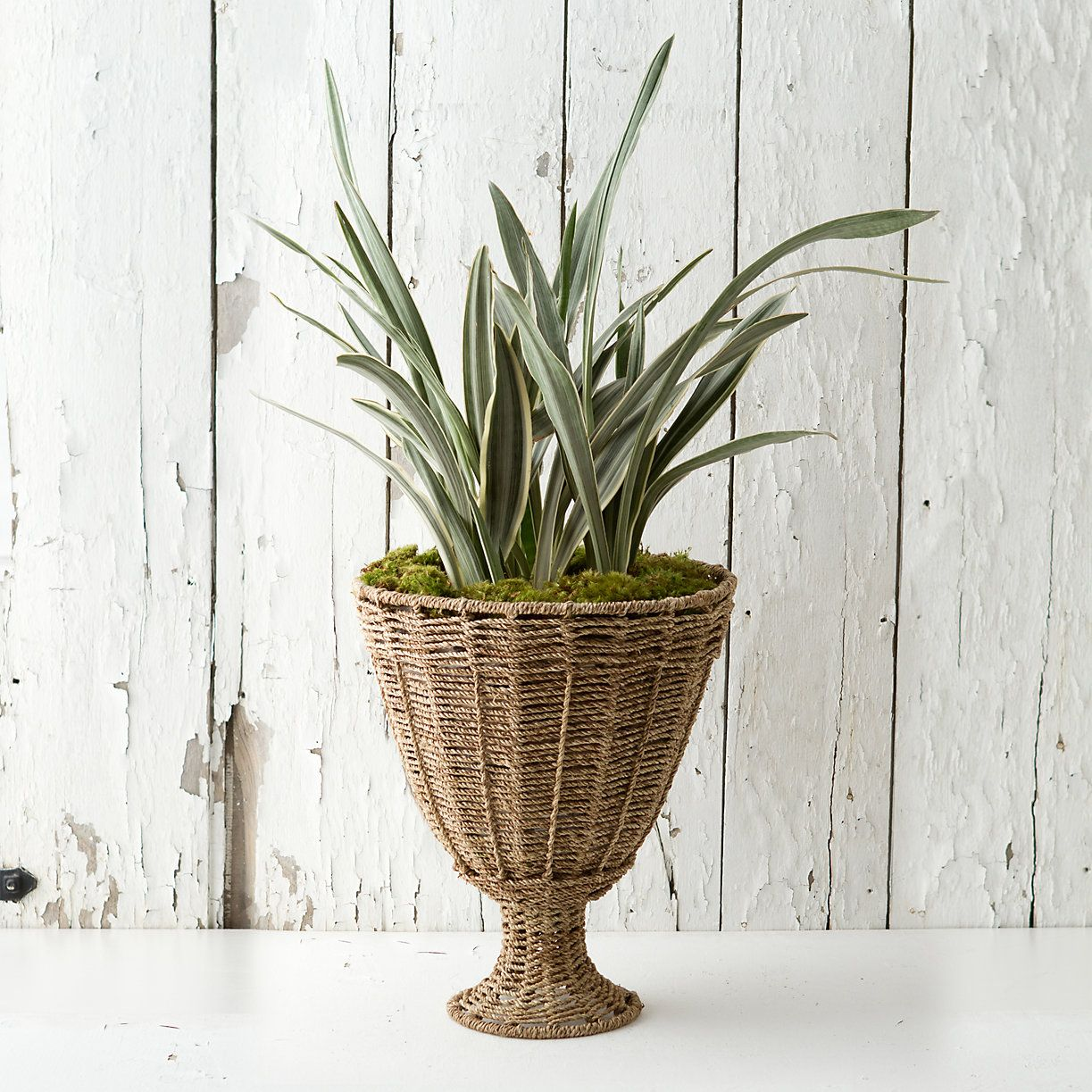 Woven Jute Urn I have a plant like this in my office in a clay pot.  I will have to give my a makeover. This is too cute.  Wonder where I can fine the urn.