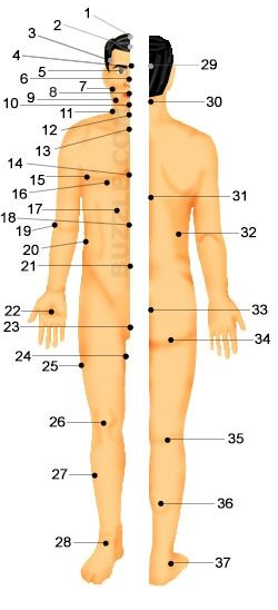 Pressure Points For Martial Arts Body Pressure Points Pressure Points Human Pressure Points