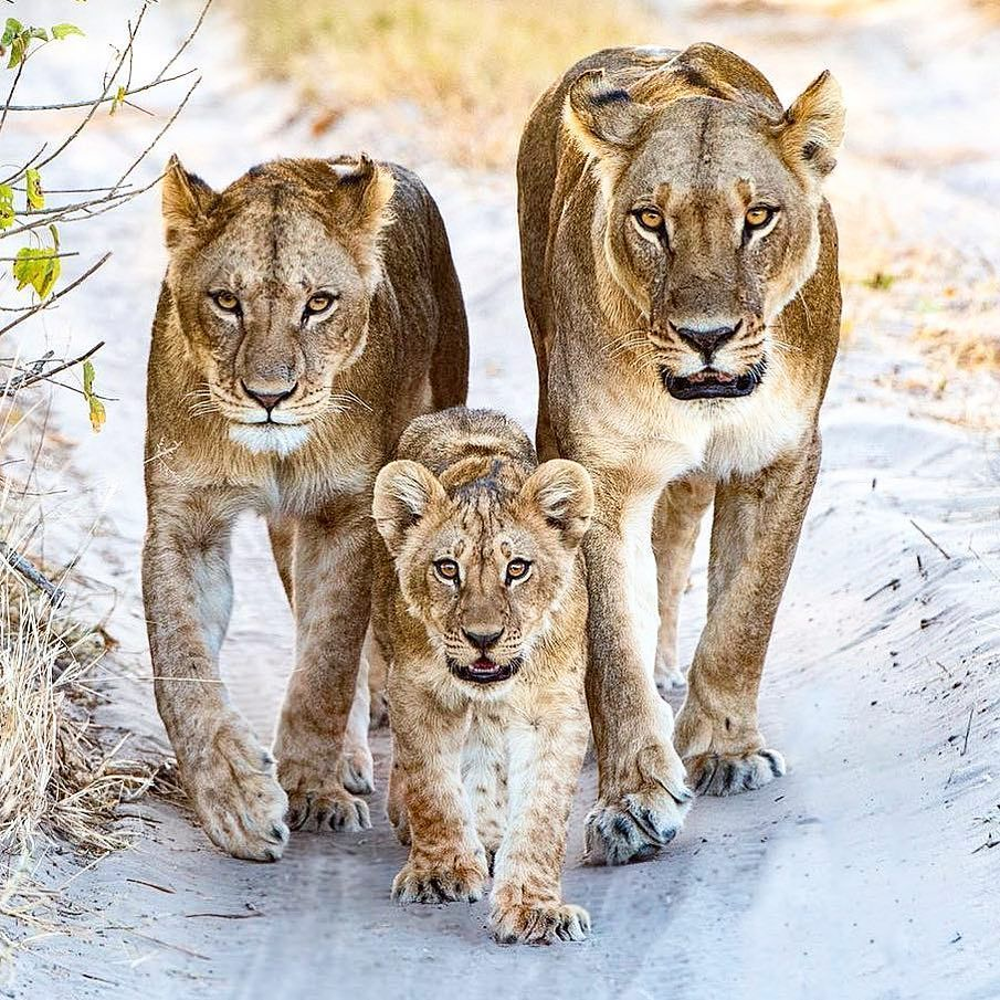 A Mum An Aunt And A Daughter Head Our For An Evening Hunt At The