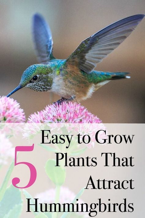 Top Flowers For a Hummingbird and Butterfly Garden ...