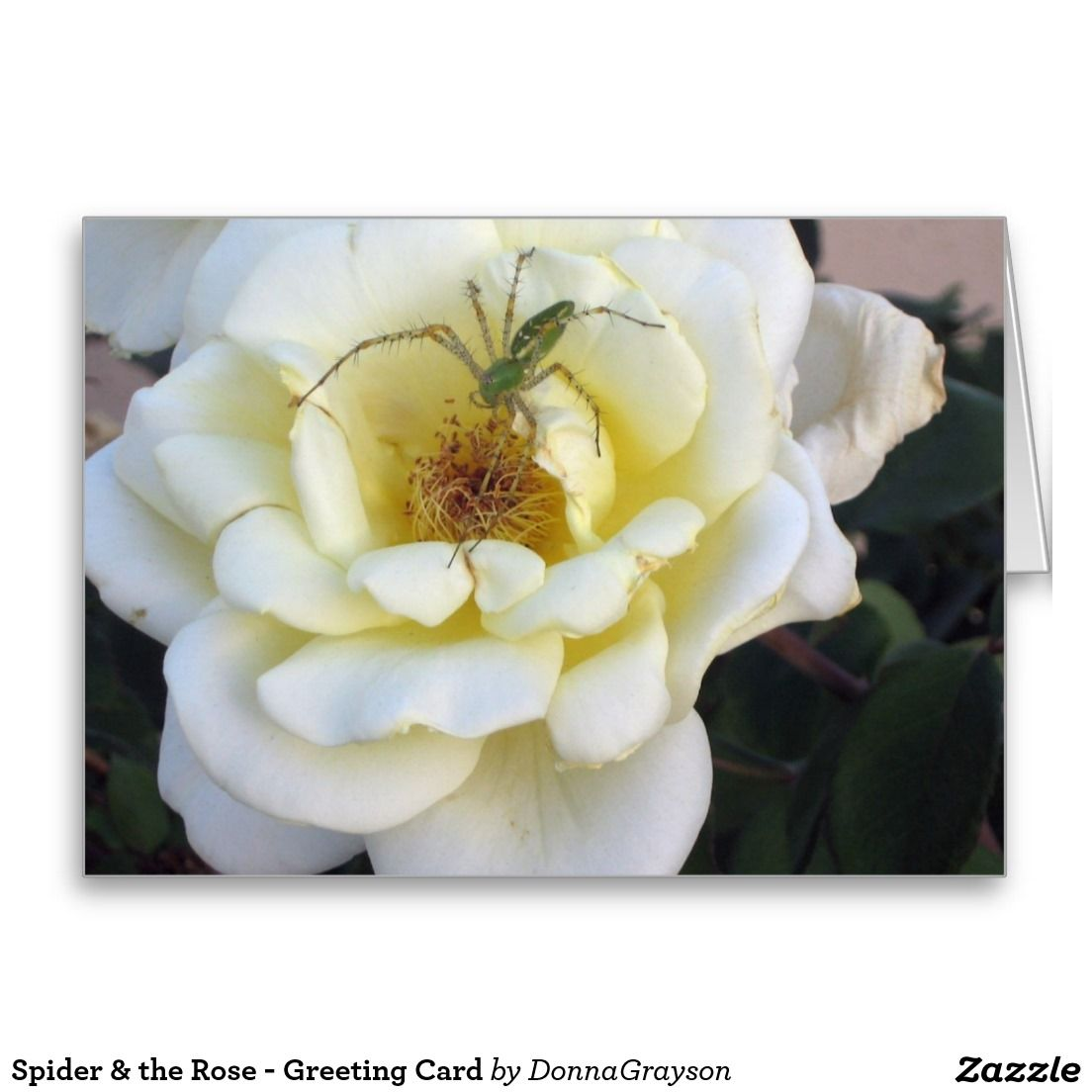 Spider the rose greeting card flowers and nature scenes spider the rose greeting card m4hsunfo