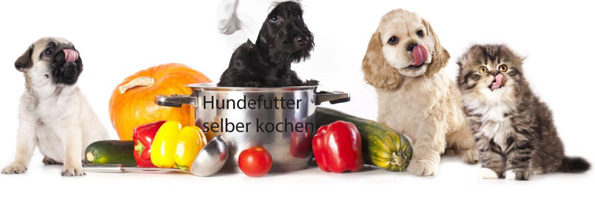 Hundefutter selber kochen Praktische Tipps und einfache