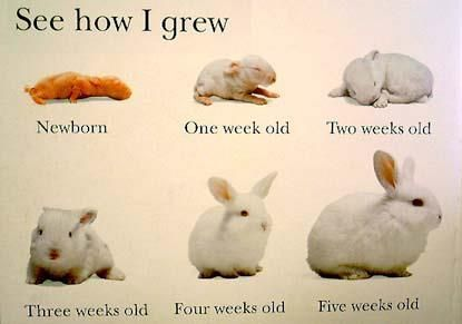 how old is your baby bunny