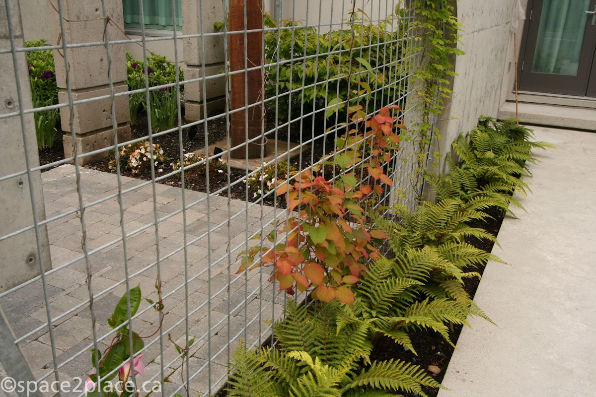 welded wire mesh vine support | BackPatio | Pinterest
