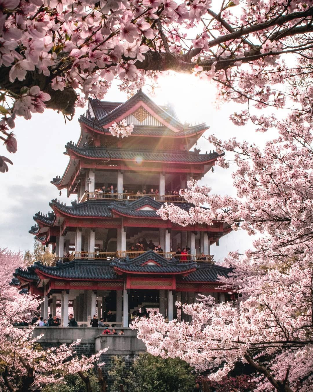 Cherry Blossoms Japan Photography China Temple Nature Photography