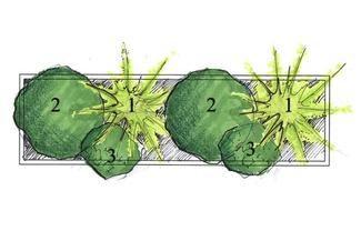 Kompozycja Z Kwiatow Doniczkowych Na Zacieniony Balkon Lub Taras Muratordom Pl Cactus Plants Plants Cactus