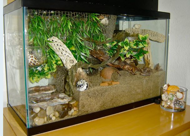 How To Keep The Sand Out Of Your Crab S Pools A Diy Plexiglas Tank Divider