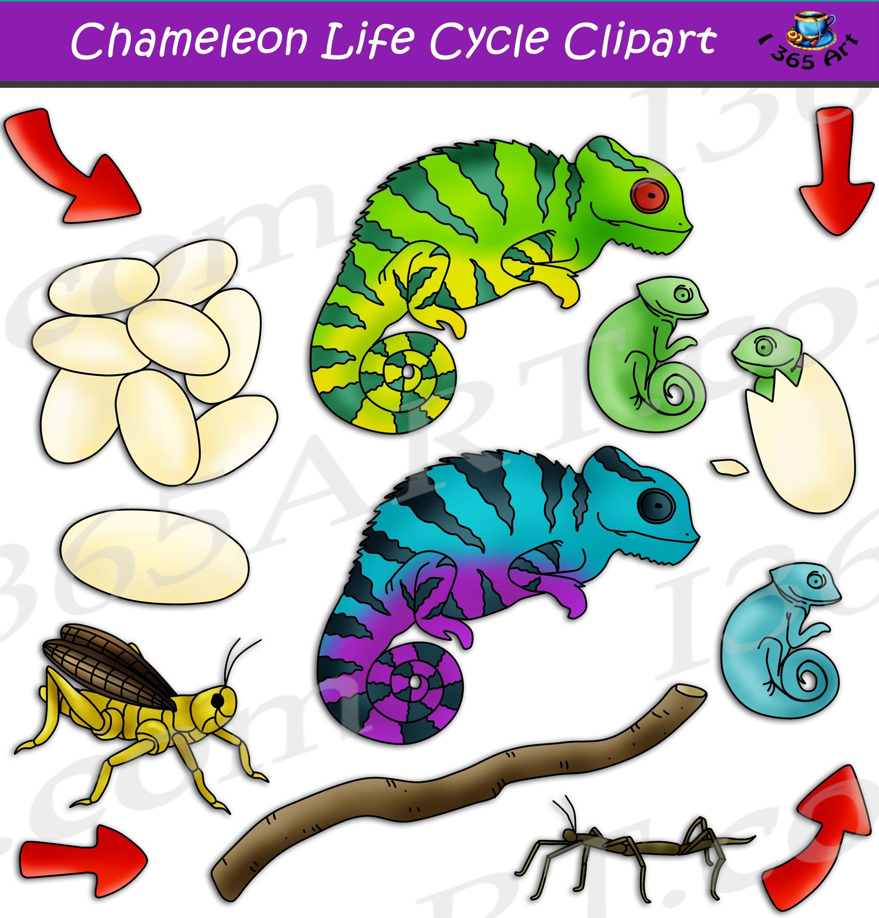 Chameleon Life Cycle Clipart Set Download