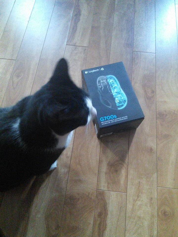 My cat finds a mouse...The Logitech G700s | MasterFujiTech Pictured ...