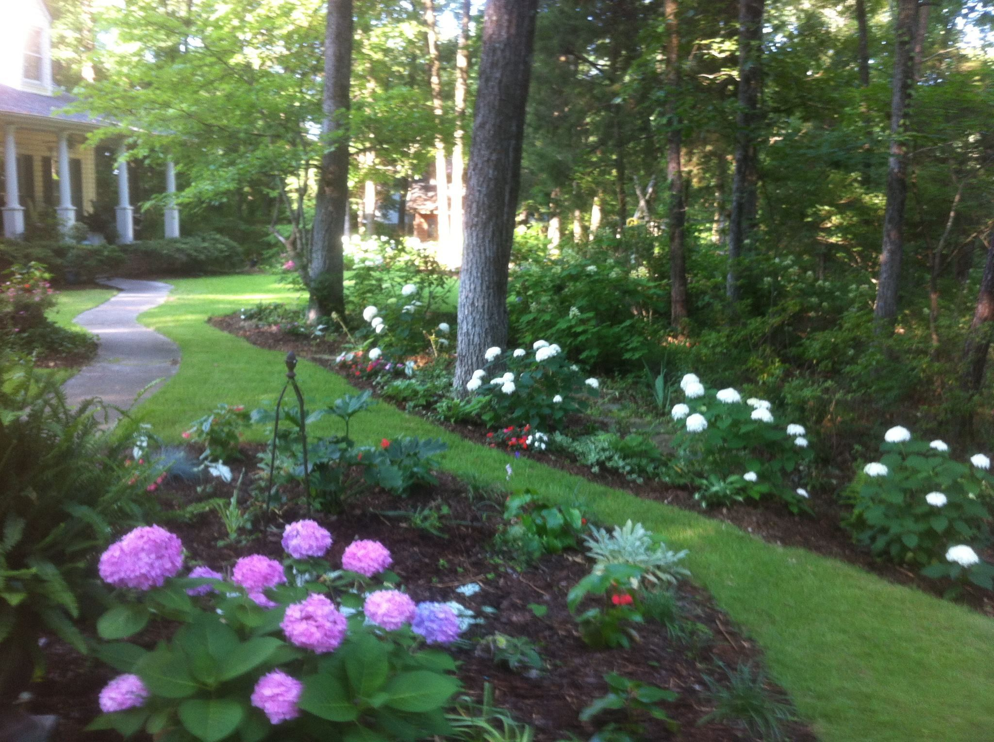 White Annabel And Penny Mac Hydrangeas Do Well In Central Alabama