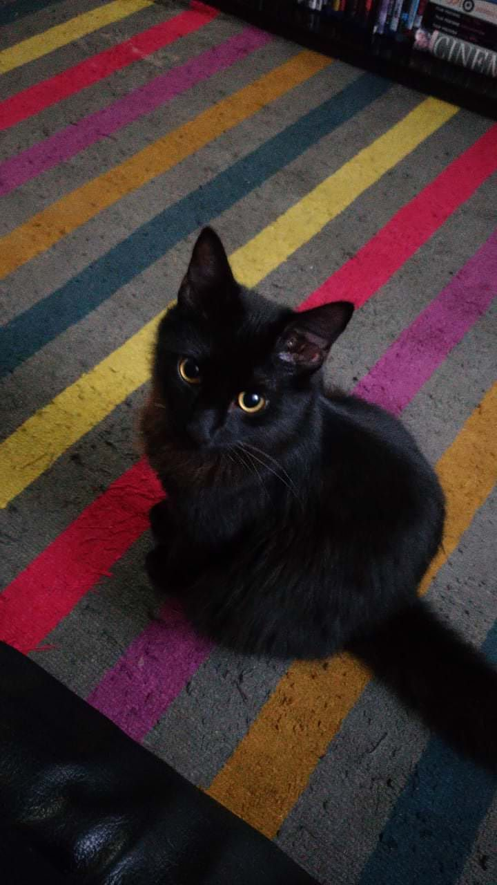 Reddit Meet Salemhttps I Imgur Com Us5eol7 Jpg Cute Cats And Kittens Baby Cats Spoiled Cats