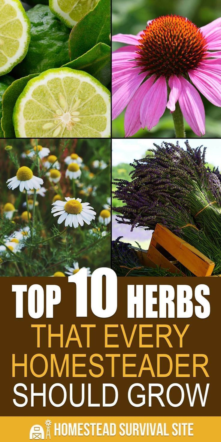 You probably already know that many herbs have abundant medicinal properties. Since most herbs are easy and inexpensive to grow in your garden, on your patio, or on your windowsill, let's dig deeper into how you can use them to help your family stay healthy.