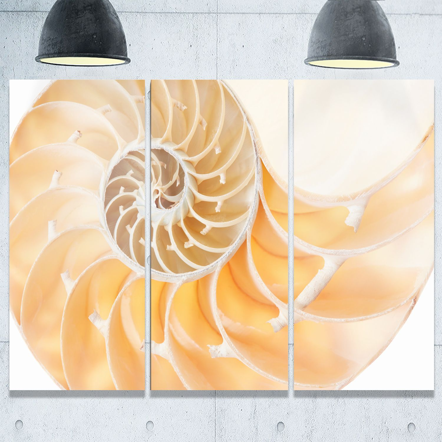 Light Brown Nautilus Shell - Abstract Art Glossy Metal Wall Art by ...