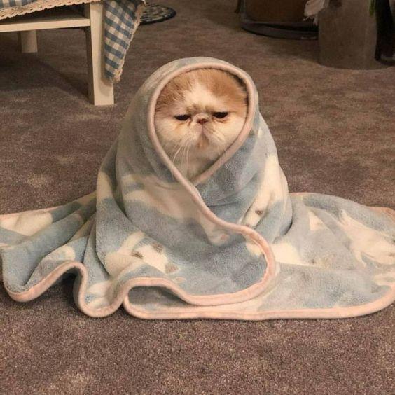 Photo of 100 fotos que prueban que los gatos son el animal más lindo del mundo