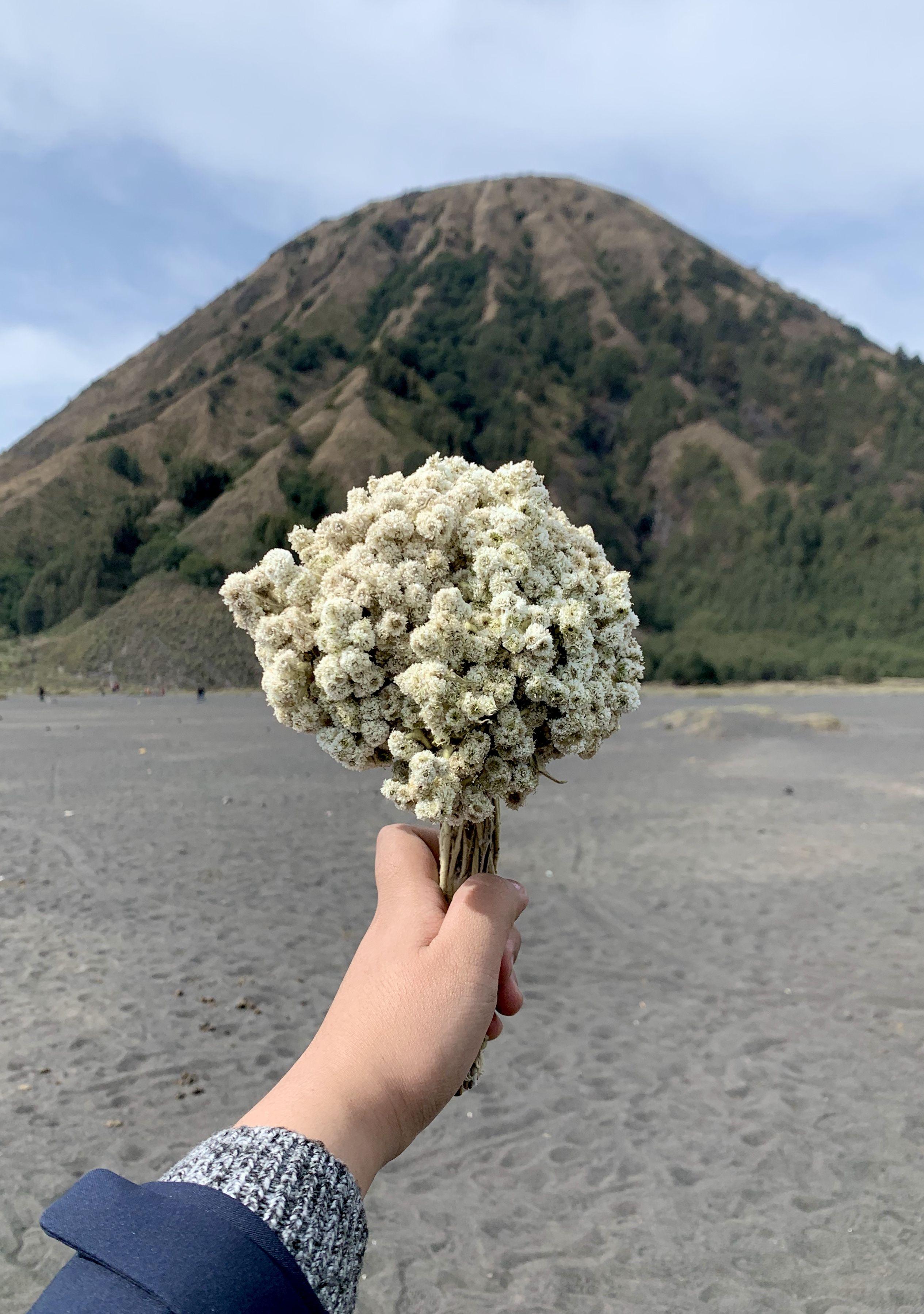 Bukit Batok Gambar Bunga Bunga Doodle Bunga