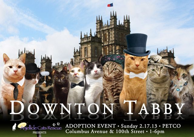 Downton Tabby Animals Cats What Cats Can Eat Cats Kittens