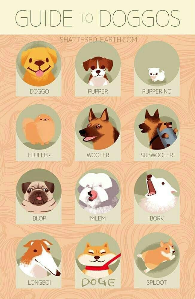 Old Age Results Mix Up Joke Sploot Animal Memes Dog Memes