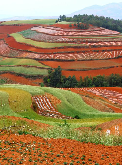 Gorgeous - I wonder if and/or what the crops are that are creating these colours