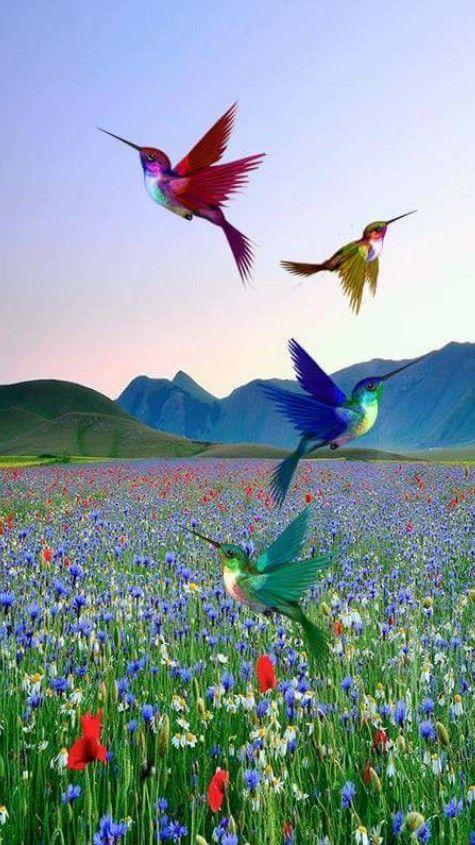 Photo For You Beautiful Pigeon Bird Pigeon Birds Symbol Of