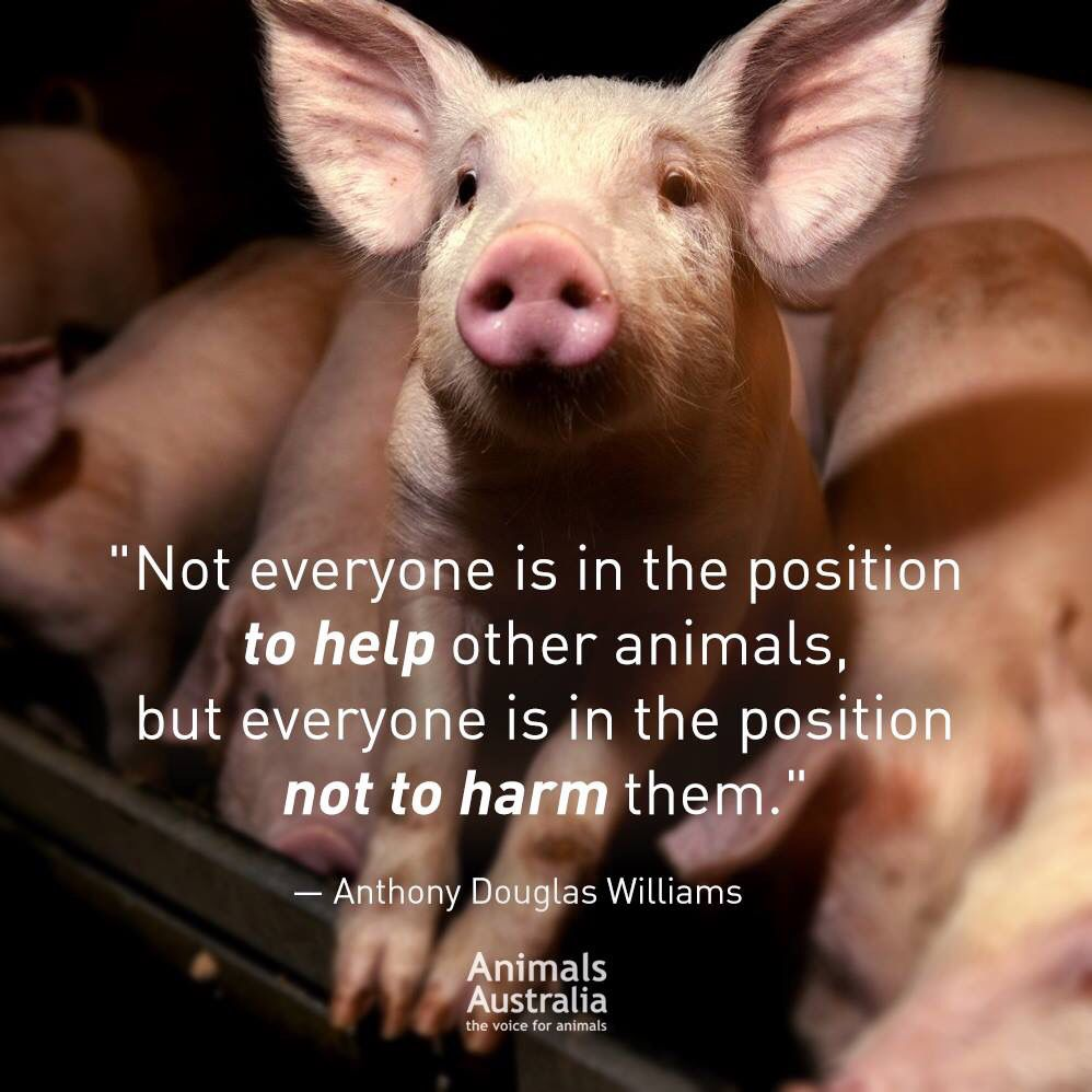 Animal Abuse Quotes Not Everyone Is In The Position To Help Other Animals But